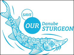 Save our Danube Sturgeon